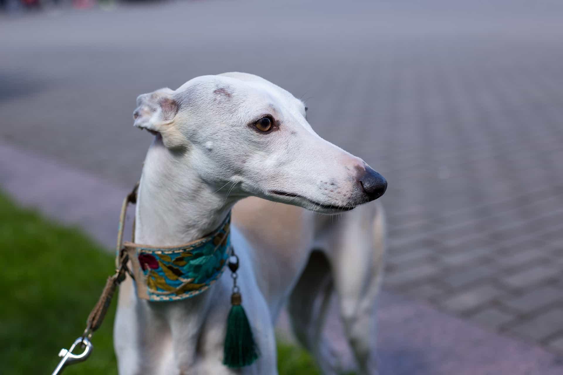Hundeanhänger: Test & Empfehlungen (01/20)