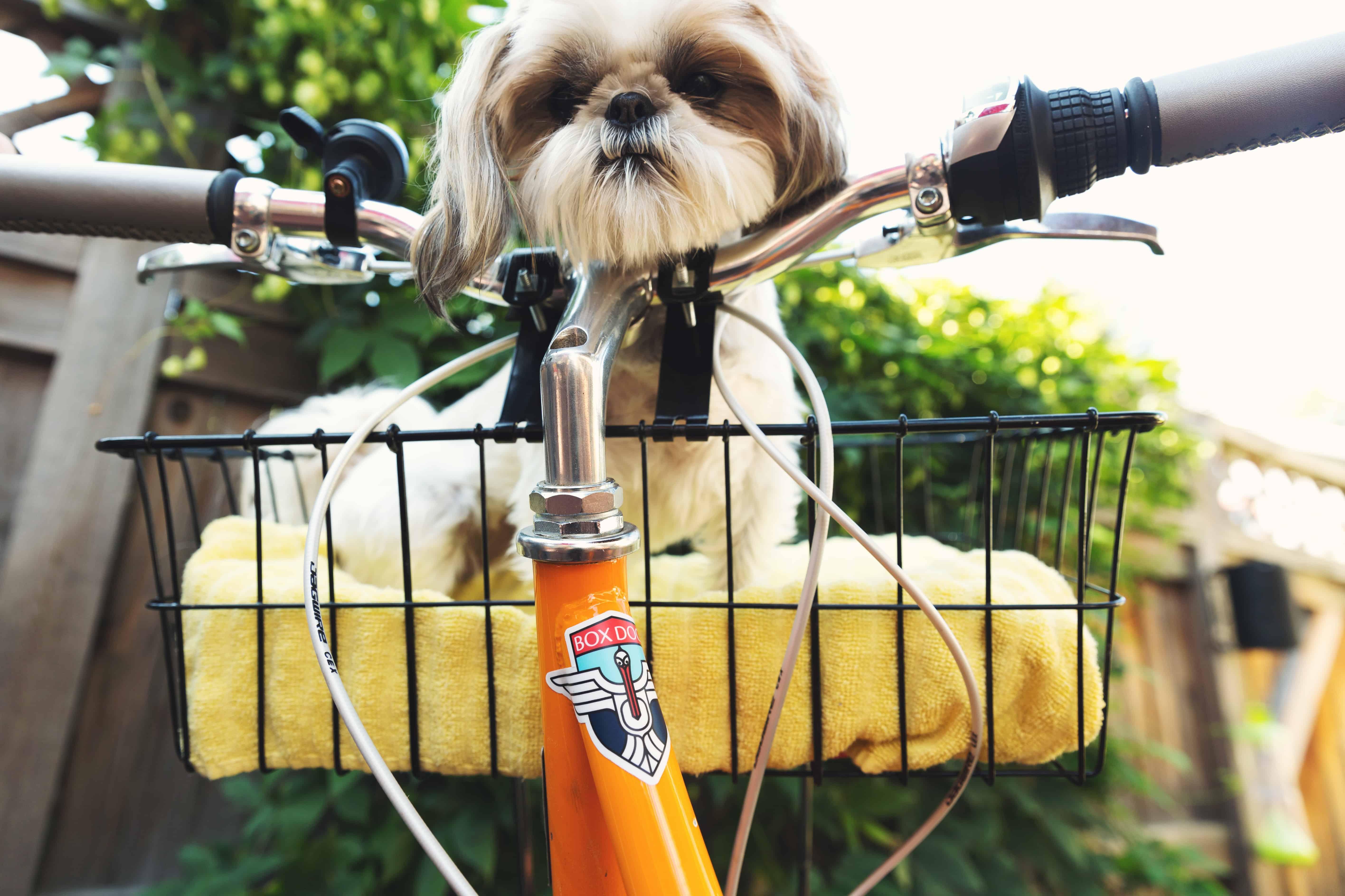 Hundefahrradkorb: Test & Empfehlungen (01/20)