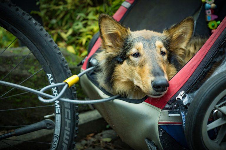 Lastenanhänger für Fahrräder-2